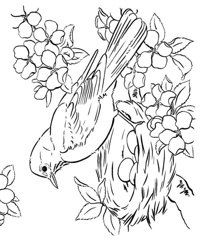 670x820 Best Free Coloring Pages For Adults Images