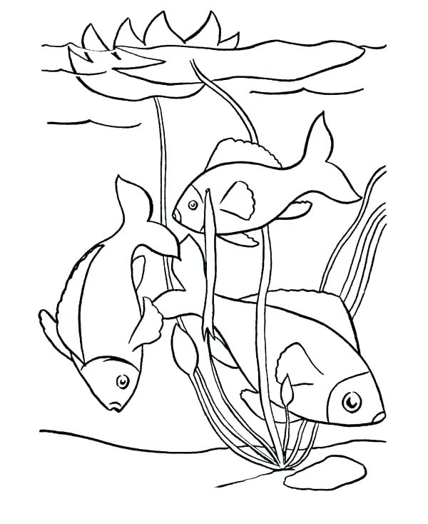 600x734 Surprising Pond Coloring Page Surprising Pond Coloring Page