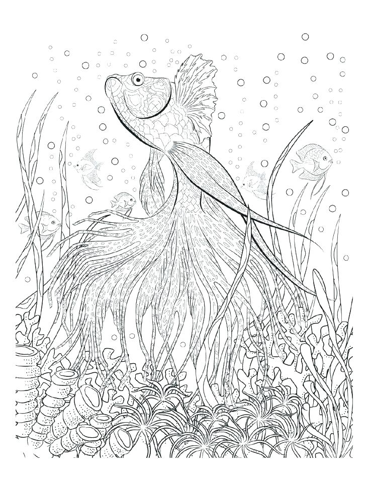 736x952 Themed Coloring Pages Adult Themed Coloring Pages Kids Free