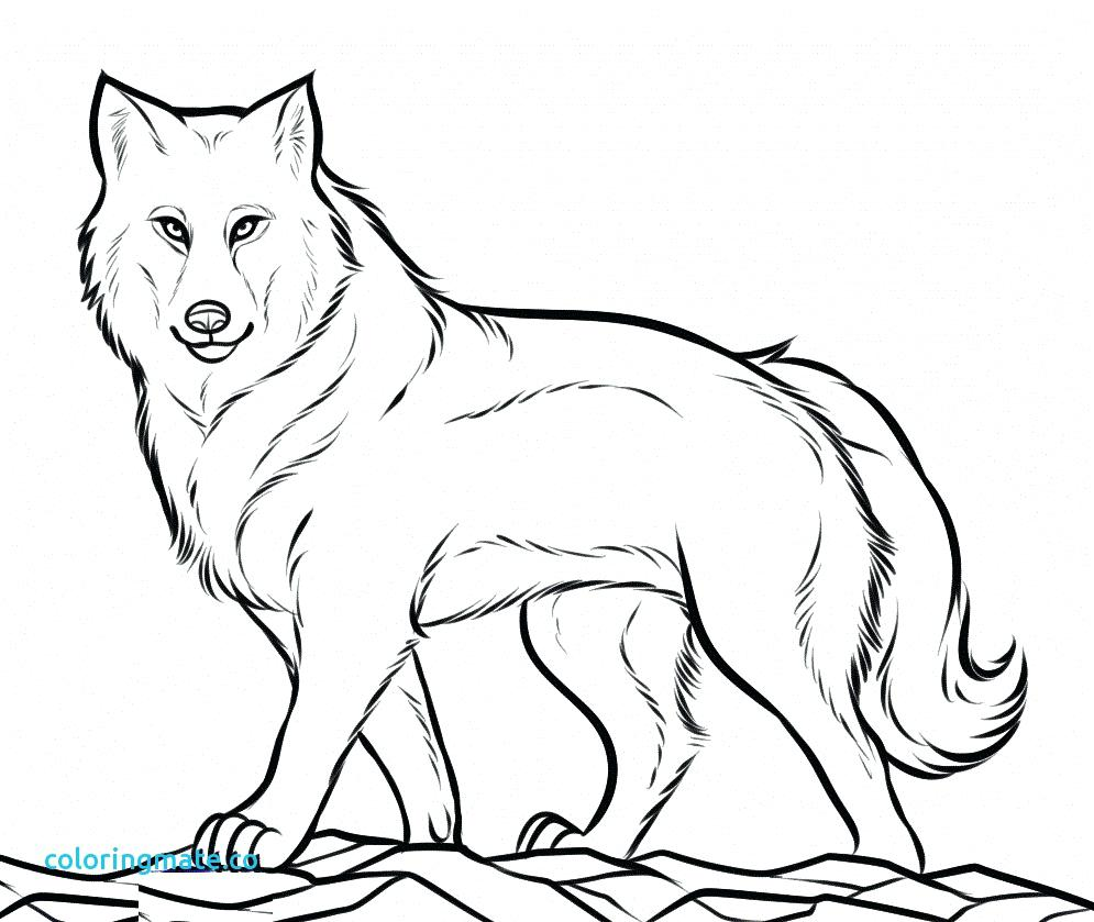 995x839 Coloring Page Wolves Coloring Pages Wolf For Adults Luxury Free