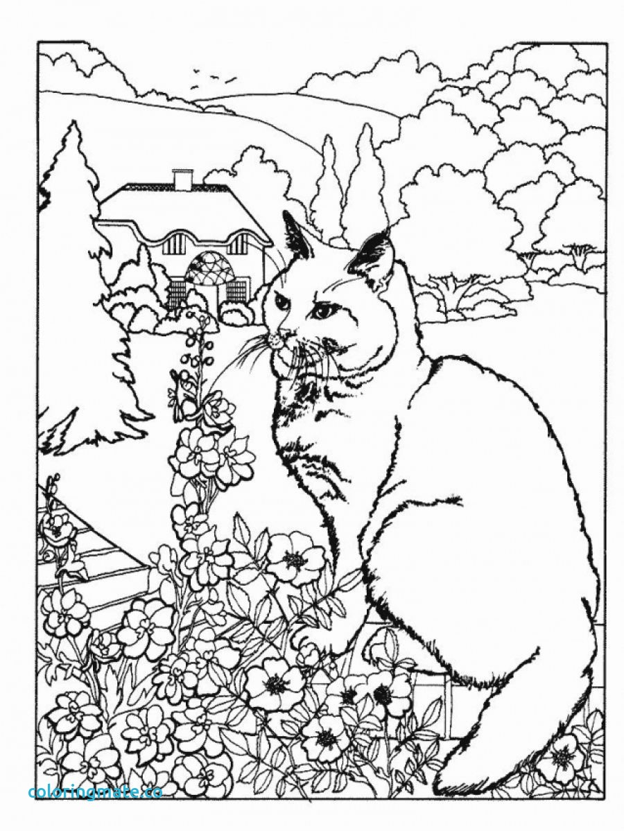 900x1199 Advanced Coloring Pages Of Animals Competitive
