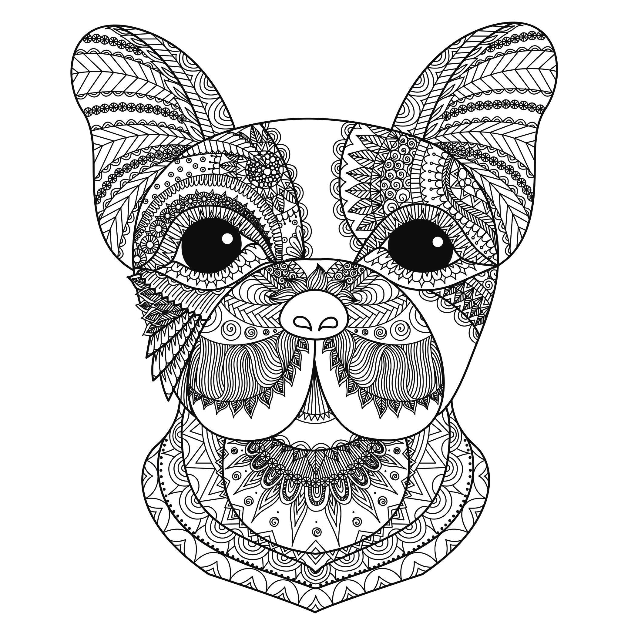 2048x2048 Pioneering Advanced Coloring Pages Of Animals Best Picture