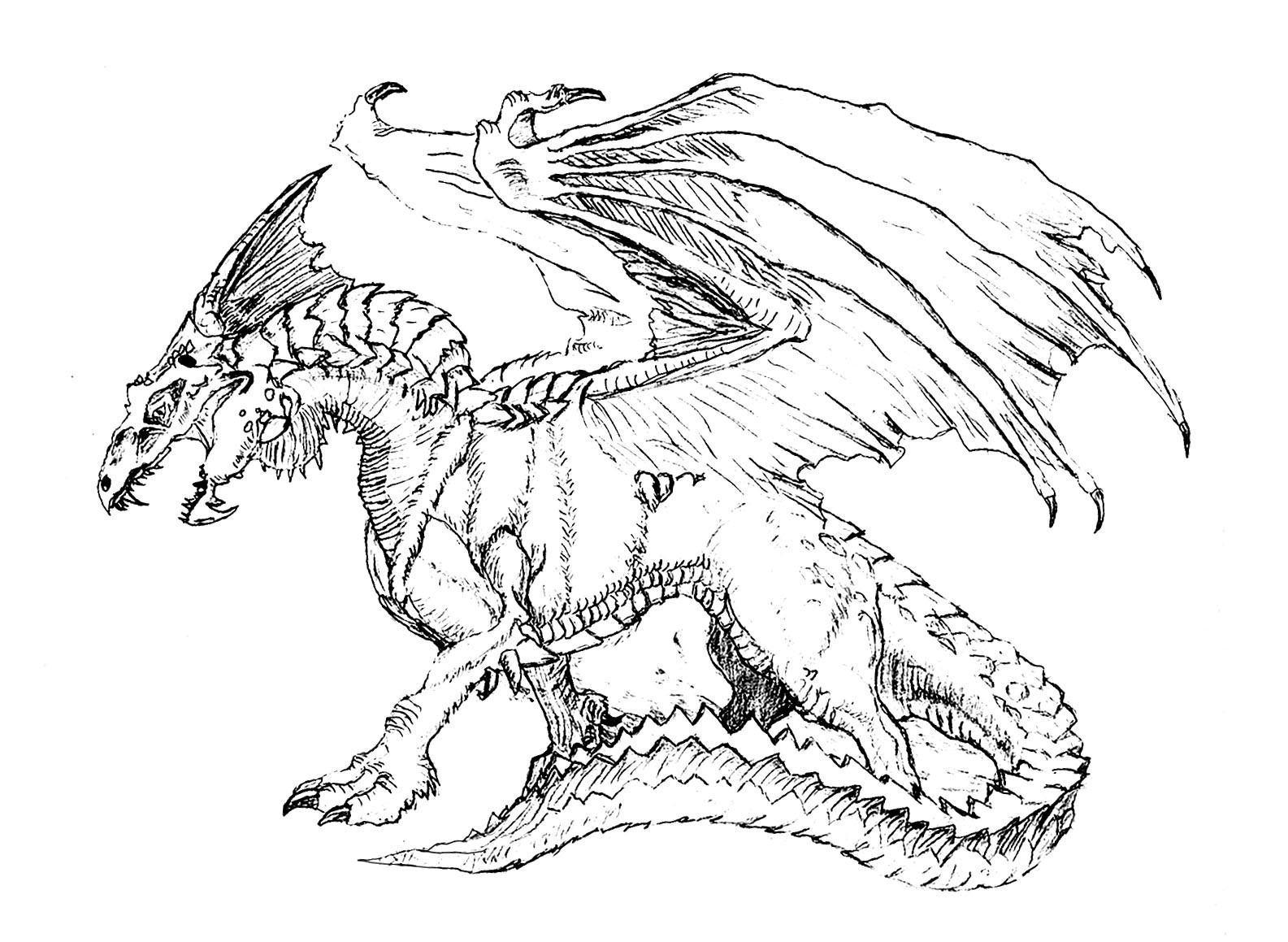1585x1159 Hard Coloring Pages Of Dragons Advanced Dragon Unusual