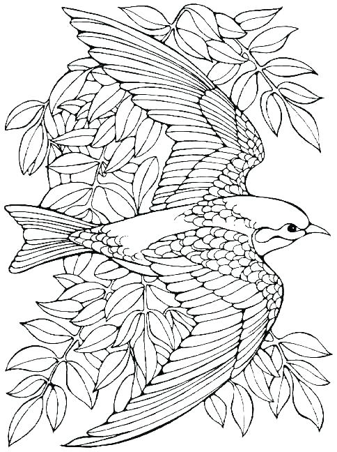 484x648 Free Adult Christmas Coloring Pages And Advanced Coloring Pages
