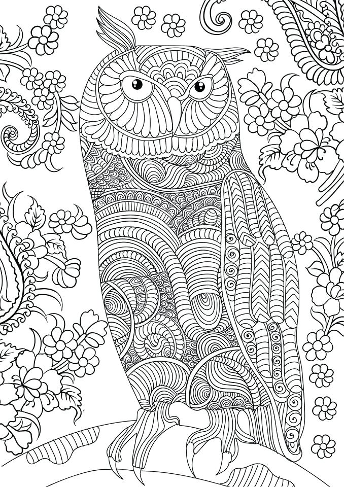 678x960 Owl Coloring Pages For Adults Free Detailed Owl Coloring Pages