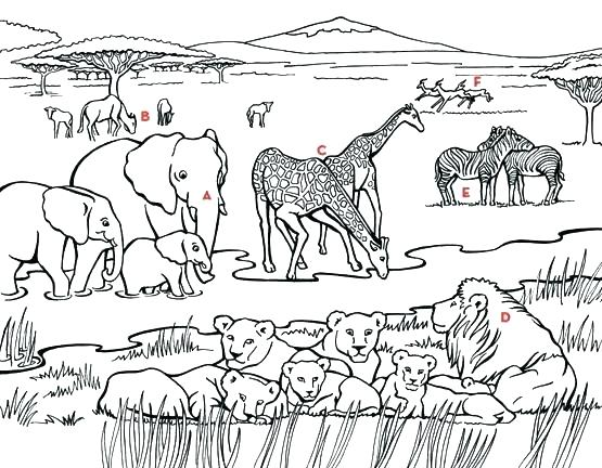 555x432 Coloring Pages African Animals