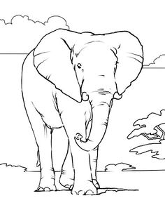 236x282 African Animals Coloring Pages Wild Animal Coloring Pages