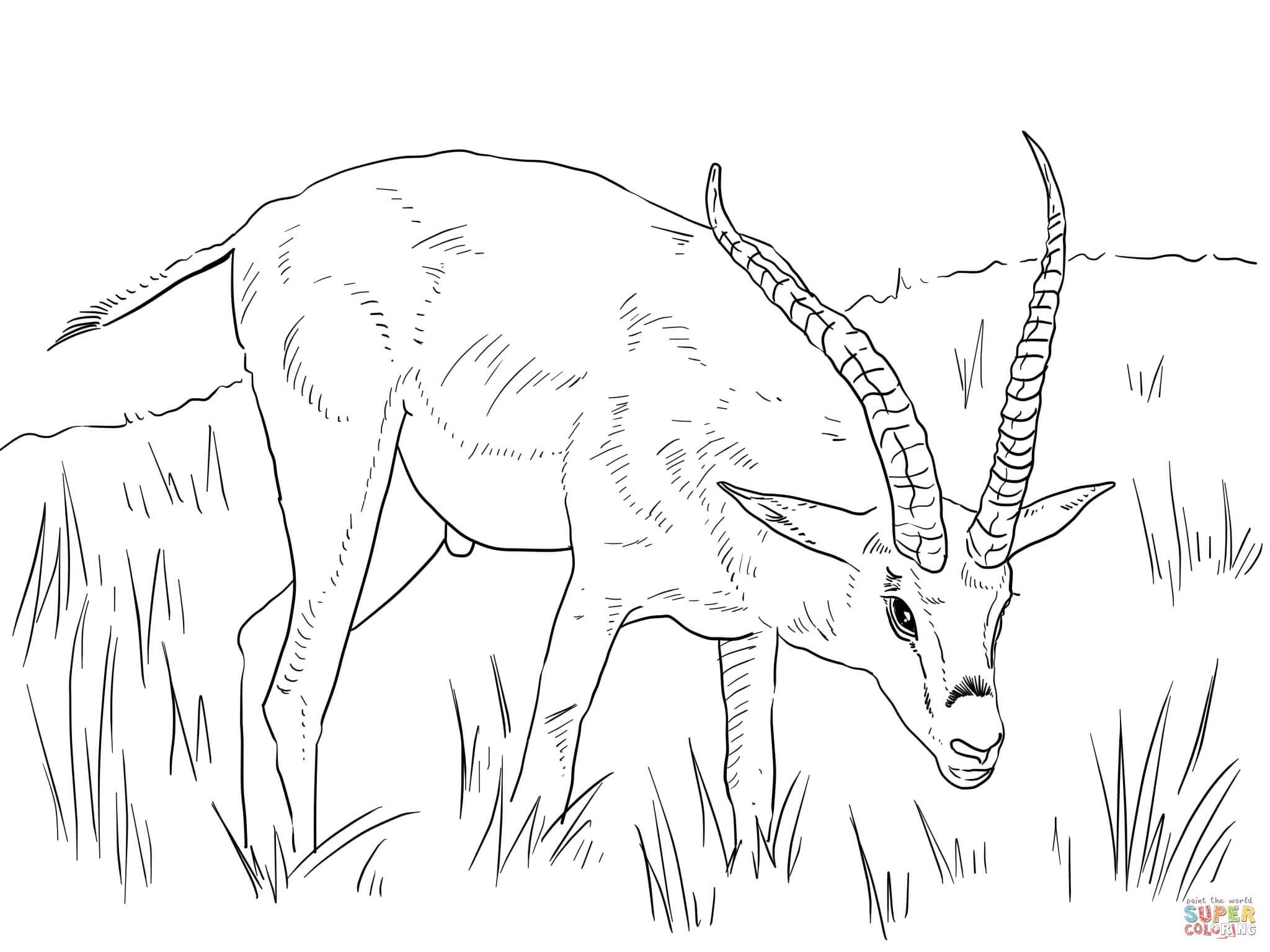 2048x1535 African Animals Coloring Pages Page Fun Striking Animal