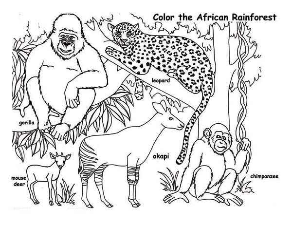 600x464 African Rainforest Animals Coloring Page