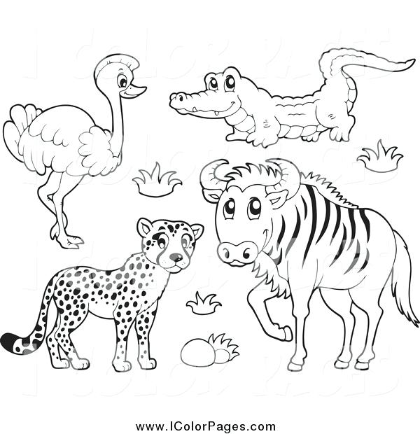 600x620 Animals Coloring Pages Safari Animal Coloring Pages Animals