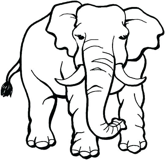 539x525 African Animal Coloring Pages Animal Coloring Pages Safari Animal