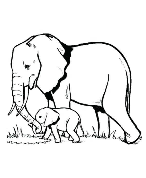 600x734 African Elephant Coloring Pages Elephant And Baby Elephant Looking