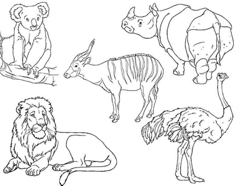 757x595 Wilde Tiere Ausmalbilder Ausmalbilder African Art