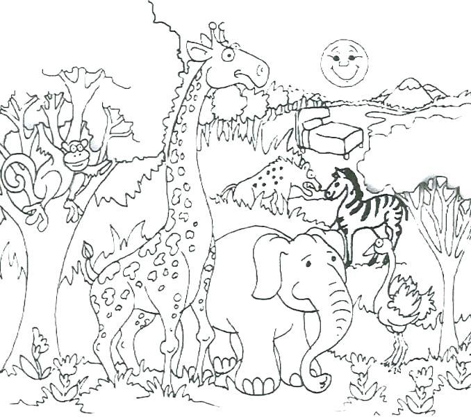 678x600 Safari Animals Coloring Pages