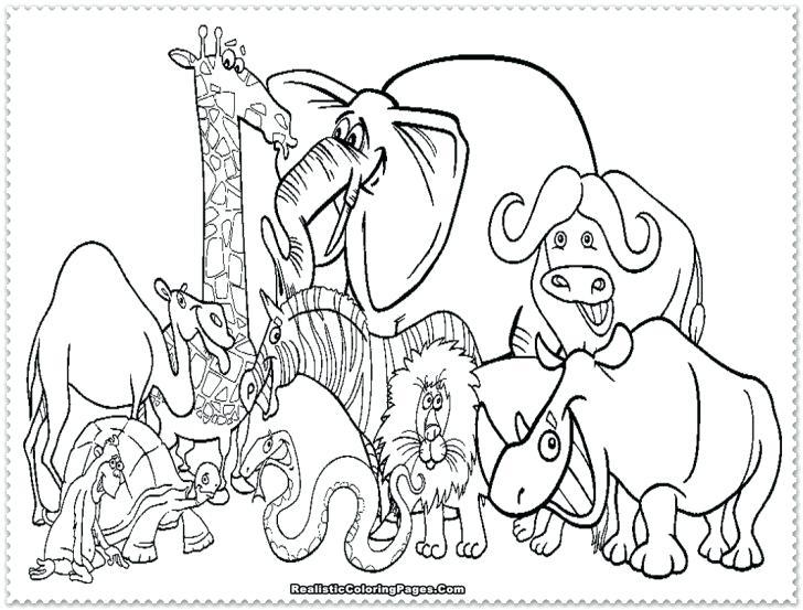 728x553 Safari Animals Coloring Pages