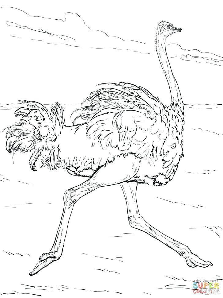 728x971 Animal Coloring Pages Animals Coloring Page Picture Free Free