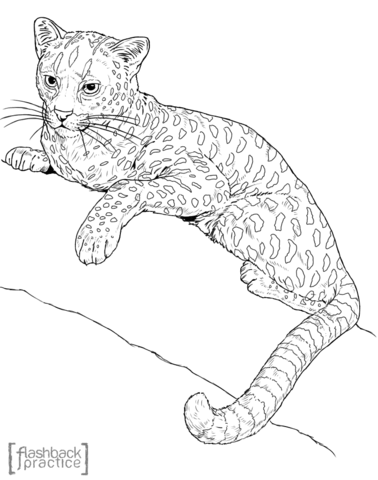 378x480 African Golden Cat On The Tree Coloring Page