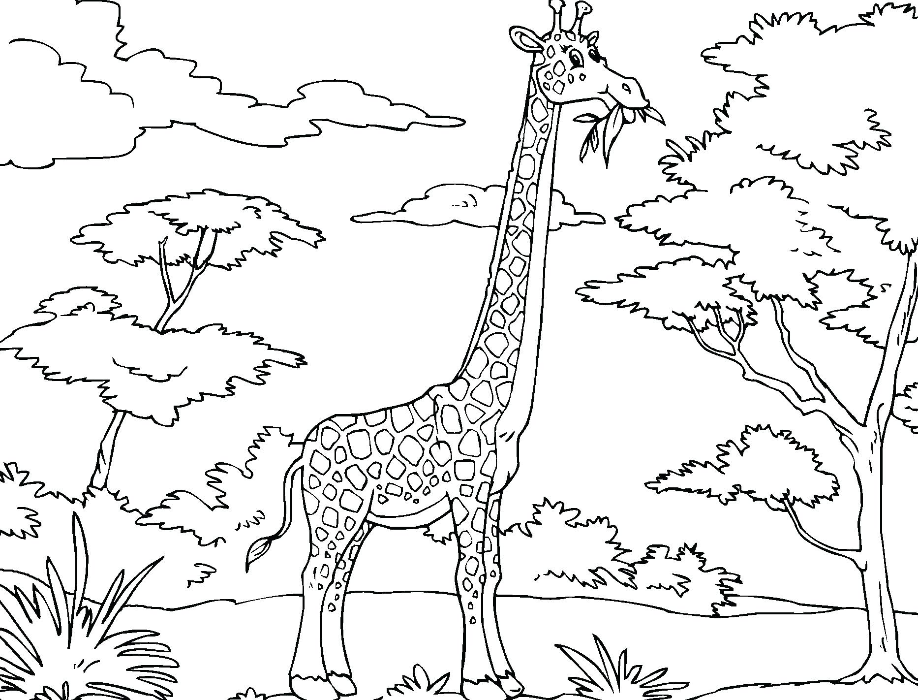 1866x1422 Coloring Pages Flowers Free Printable Amazing Elephant Cartoon