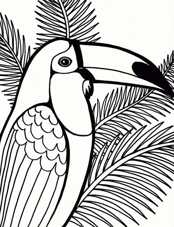600x781 Parrot On Coconut Tree Coloring Page