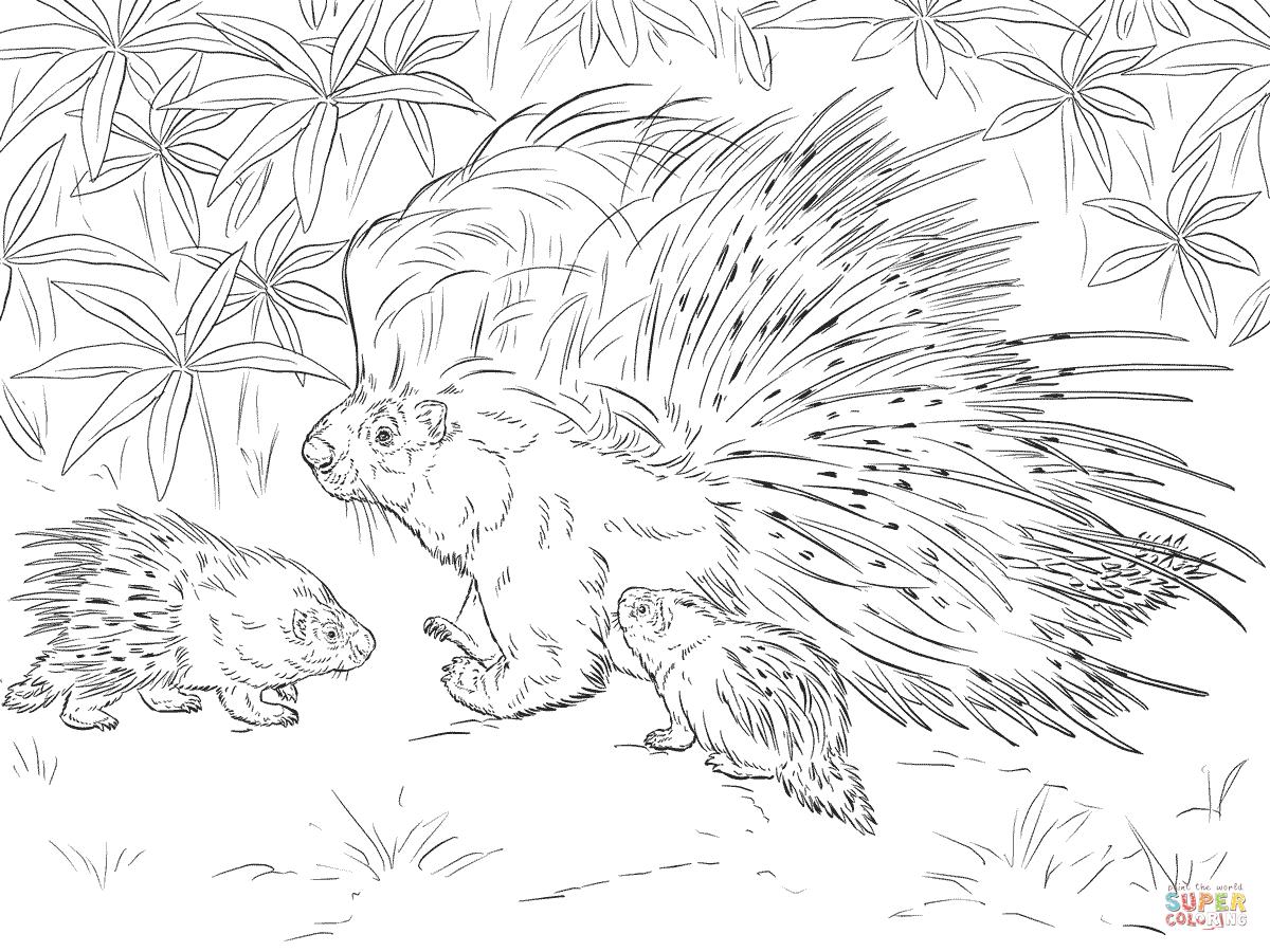 1200x900 Porcupine Coloring Pages