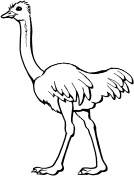268x350 Free Coloring Page Of African Trees Ostrich Coloring Page