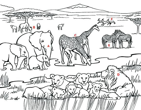 555x432 Coloring Pages African Animals Unique Africa Coloring Pages