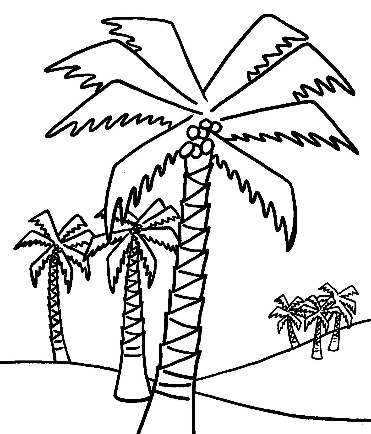 1552x1818 Coloring Pages Of A Palm Tree Printable Coloring For Kids
