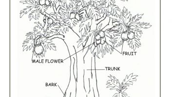 355x200 Real Tree Adult Coloring Pages Download Coloring For Kids