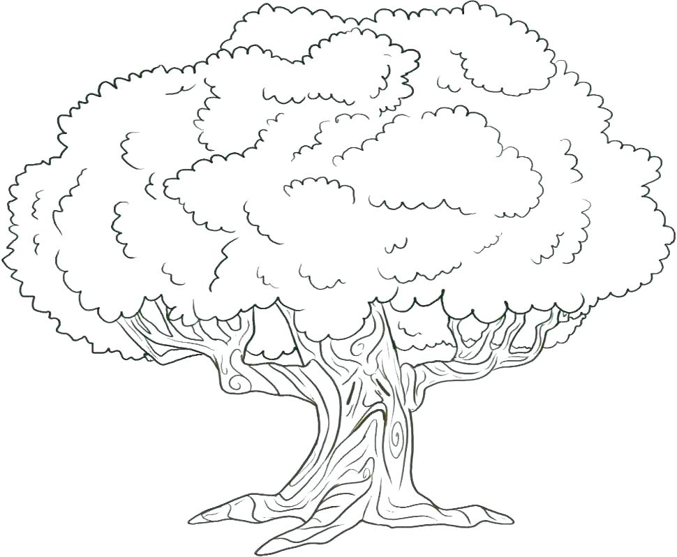 970x798 Tree Pictures For Colouring Oak Tree Coloring Page For Kids Color