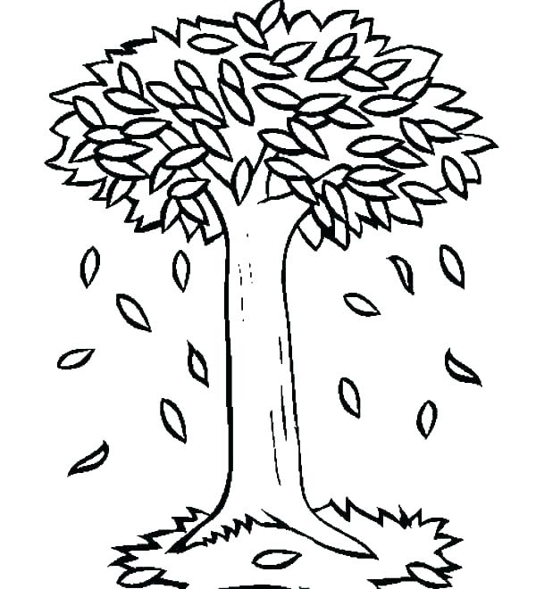 600x660 Trees Outline Drawings Bare Tree Coloring Page Trees Outline