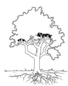 236x298 Free Coloring Page Of African Trees You Might Also Like These
