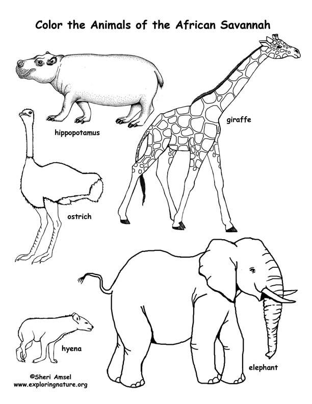 612x792 African Animals Coloring Pages