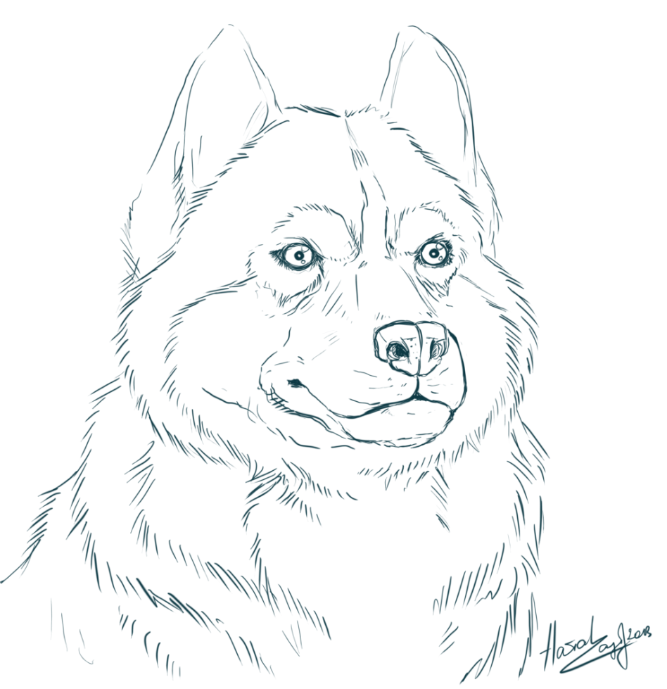 948x979 Valuable Coloring Pages Of Husky Puppies With Wallpapers