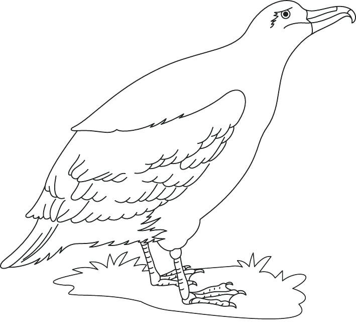709x658 Cute Bird Coloring Pages A Cute Albatross Bird Coloring Page Cute