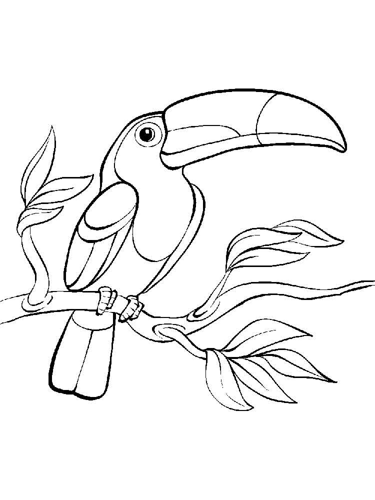 750x1000 Toucan Coloring Pages Download And Print Toucan Coloring Pages