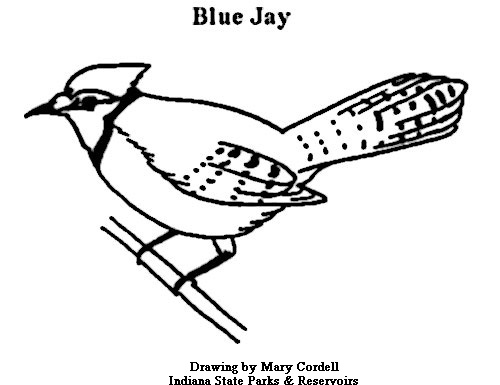 500x385 Dnr Coloring Pages