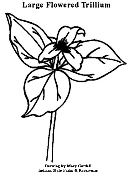 412x550 Dnr Coloring Pages