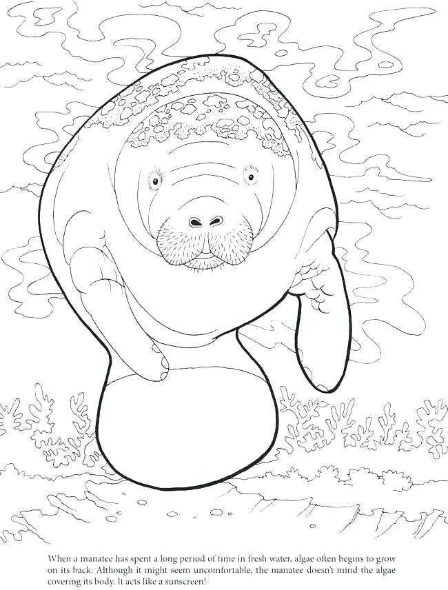 650x856 Manatee Coloring Page Manatee Coloring Pages Manatee Coloring