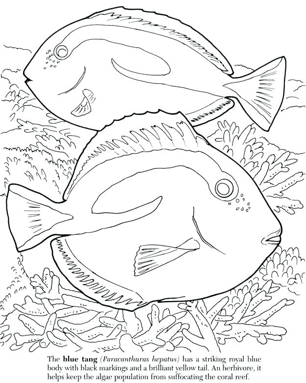 624x780 Ocean Fish Coloring Pages Free Creation Coloring Page Fish Ocean