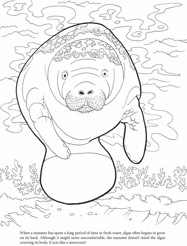 650x856 Welcome To Dover Publications Coloring Pictures And Stuff