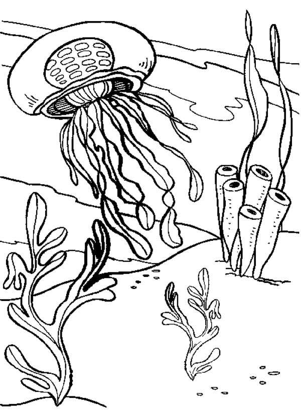 600x835 Jelly Fish And Seaweed Coloring Page