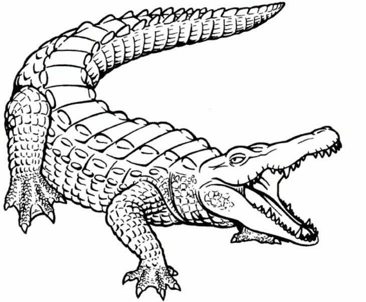 image about Alligator Printable called Alligator Printable Coloring Webpages at  Totally free