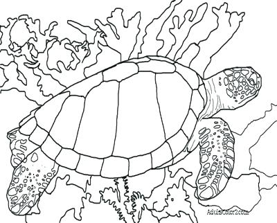 400x322 Green Sea Turtle Coloring Page Sea Turtle Coloring Page Green Sea