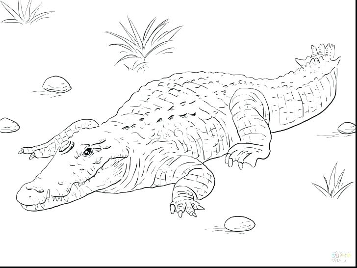 728x546 Alligator Coloring Page Alligator Snapping Turtle Coloring Pages