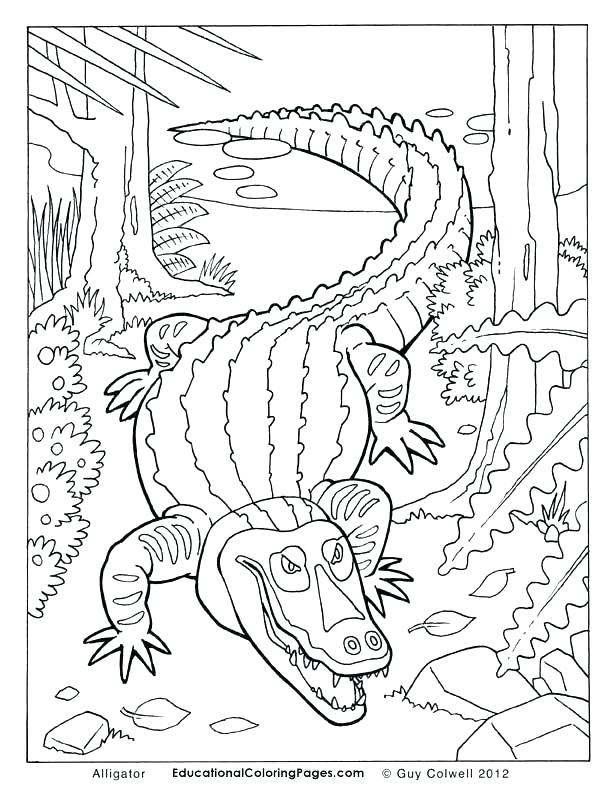 612x792 Alligator Coloring Pages Alligator Snapping Turtle Coloring Pages