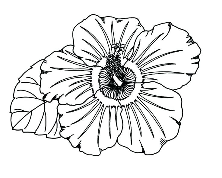 736x590 Coloring Pages Coloring Pages Coloring Page Here Are Coloring