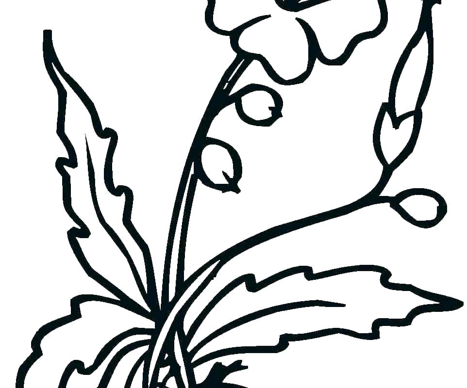 962x800 Hibiscus Flower Coloring Pages Hibiscus Flower Colouring Pages