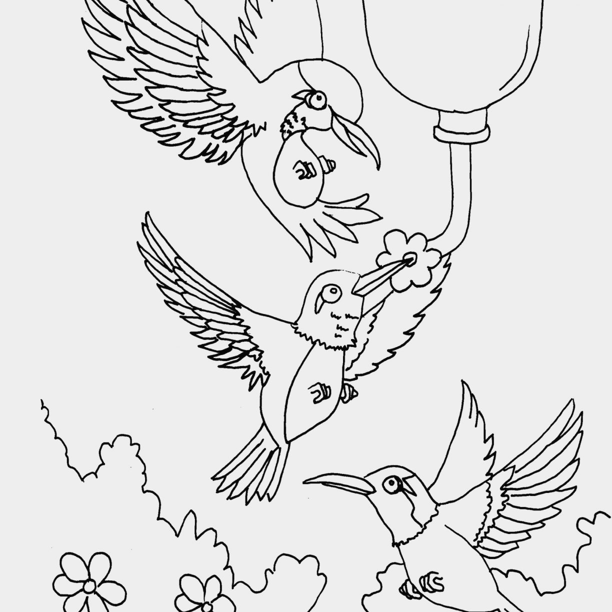 1224x1224 Hummingbird Coloring Page With Get This Beautiful Printable