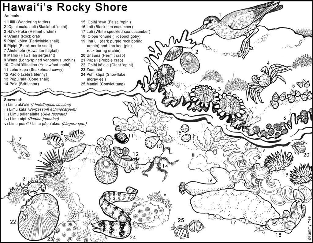 1023x792 Aloha Hawaii Coloring Page Free Printable Pages Beautiful