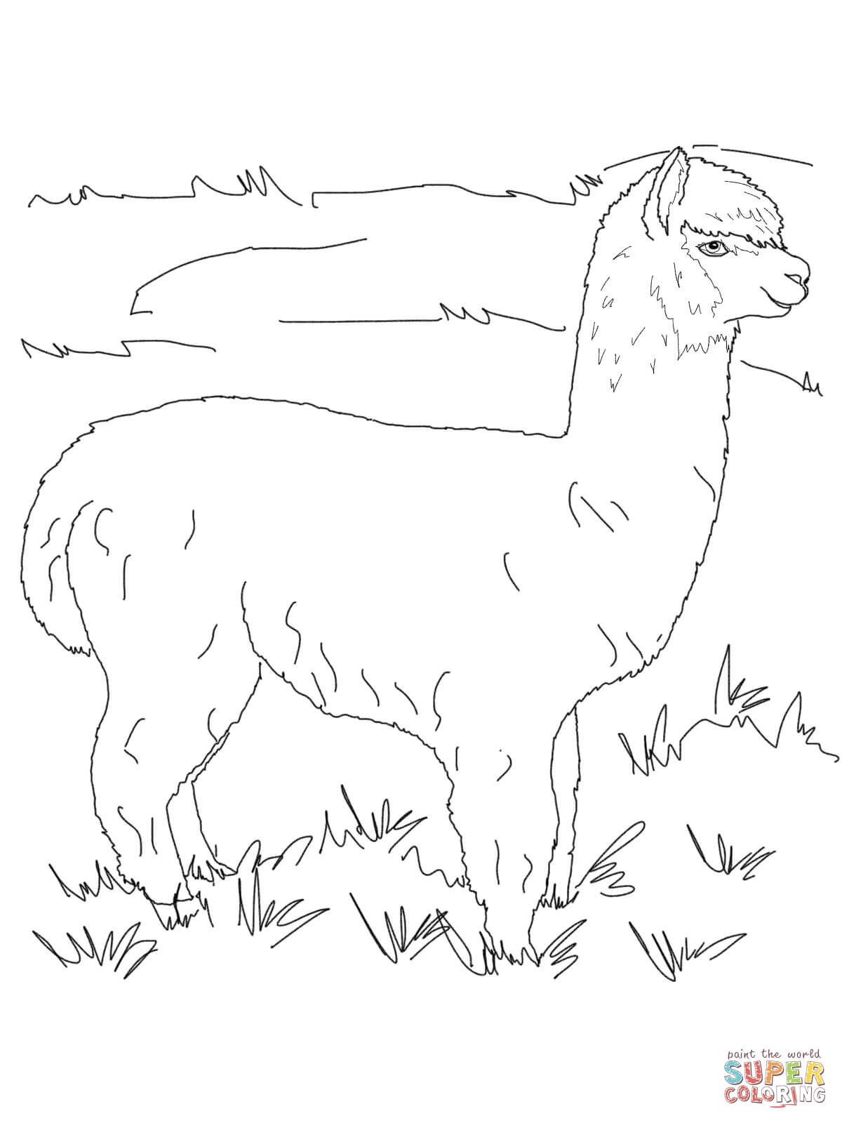 Alpaca Coloring Page At Getdrawingscom Free For Personal Use